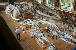 Photo for When Whales Walked: Journeys In Deep Time