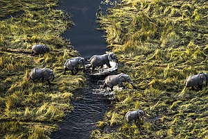 Photo for NATURE: Okavango: River Of Dreams