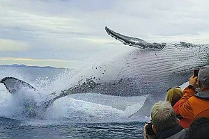 Photo for NATURE: The Whale Detective