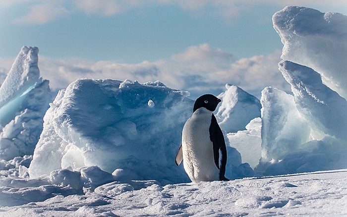 Penguin on the ice. Following a trail of fossils found in all the wrong place...