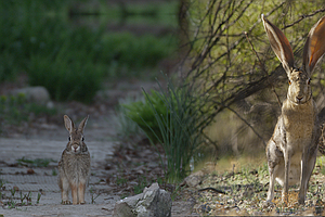 Photo for NATURE: Remarkable Rabbits