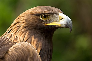 Photo for NOVA: Eagle Power