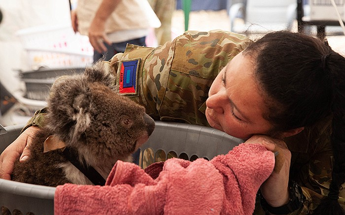 Member of the Australian Defence comforts a koala. Meet the people rescuing a...