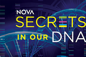Photo for NOVA: Secrets In Our DNA