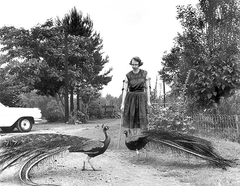 Flannery O'Connor with her peacocks. (undated photo)