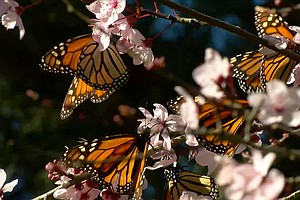 Photo for Butterfly Town, USA