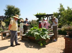 Photo of people looking at the vegetable garden exhibit. Growing your own food can be a part of any water-wise garden. Using techniques like raised beds and soaker hoses, you can grow most any vegetable.