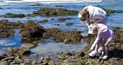 Visitors at a local tide pool. Experience a tidepooling excursion with aquarium naturalists from Birch Aquarium at Scripps Institution of Oceanography, UC San Diego.