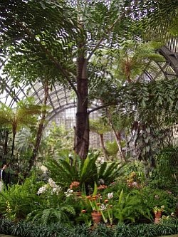 Interior shot of greenery and large tree in the San Diego Botanic Garden.