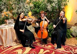 Photo of the Caprice Strings Trio. Caprice Strings beautifully melds the string sounds of violin, viola, and cello into a trio ensemble.