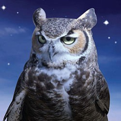 Promotional image of an owl for the Chula Vista Nature Center's special NEW family overnight experience for Halloween: Mysterious Midnight at the Marsh.