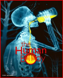 "Promotional graphic for the IMAX presentation of ""The Human Body"" at the Reuben H. Fleet Science Center."