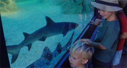 Young patrons looking at the main attraction during Shark Week at the Birch Aquarium.