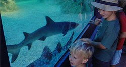 Young patrons looking at the main attraction during Shark...