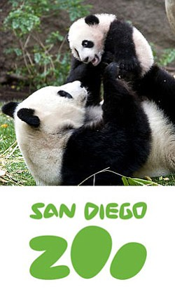 Promotional graphic for the San Diego Zoo. Courtesy of the San Diego Zoo