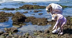 Experience a tidepooling excursion with aquarium naturalists Jan. 29, 2011. Photo Credit:  Birch Aquarium at Scripps.