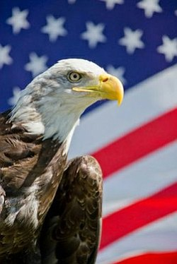 Promotional image of a Bald Eagle and American Flag.