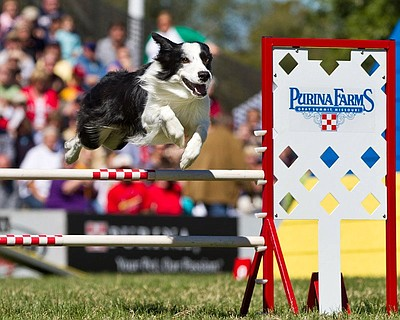 Promotional graphic for Purina Pro Plan Incredible Dog Challenge on June 9th. Courtesy of Barknetwork.