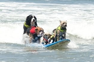 Graphic of dogs surfing at the Surf Dog Competition At Du...