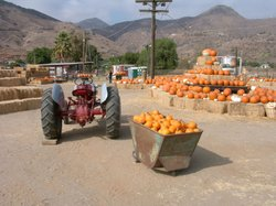 Promotional photo of Oma's Pumpkin Patch. Courtesy of Oma's Pumpkin Patch