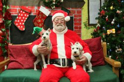 Promotional image of pet pictures with Santa. Image provided by the Escondido Humane Society.
