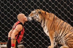 Promotional image of a trainer and tiger. Courtesy of Ringling Bros. and Barnum & Bailey.