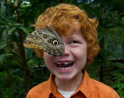 A young guest enjoys Butterfly Jungle. Courtesy of San Diego Zoo Safari Park