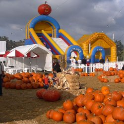 Promotional photo of the slide at Stu Miller's Pumpkin Patch.