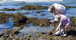 "Promotional image for ""Tidepooling for Tots"" at Birch Aquarium At Scripps. Image of an adult and child at False Point exploring tidepools"