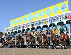 Promotional photo of horses and riders lined up at the starting gate, Del Mar Racetrack.