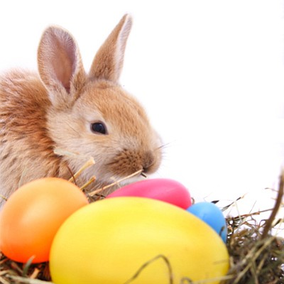 Image of Easter bunny, basket and eggs.