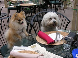 Image of Fluffy and Hercules on The Cosmo's beautiful, dog-friendly orchard patio.
