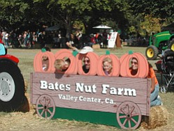 Promotional photo of a family participating in Bates Nut Farm Pumpkin Patch, Celebrating 40 years of tradition. Courtesy photo of Bates Nut Farm.