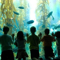 Image of children looking at an exhibit at the Birch Aqua...