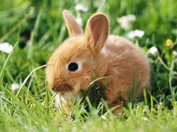 Image of a bunny for Easter.