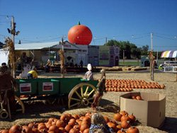 Promotional photo of El Cajon Pumpkin Station located at Westfield Parkway Plaza. Courtesy photo of Pumpkin Station.