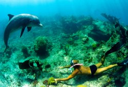 Dudzinski swims with Atlantic spotted dolphins in Bimini. Courtesy of ©Bob Talbot