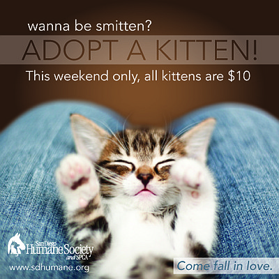 Promotional graphic to adopt a kitten from the San Diego Humane Society on November 8th - 10th, 2013. Courtesy of the San Diego Humane Society.