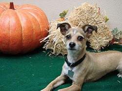 San Diego Humane Society's Halloween Doggie Cafe on October 25, 2013. Courtesy photo of San Diego Humane Society.