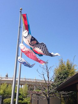 Promotional image of Koinobori (koi streamers) at the Japanese Friendship Garden on May 4, 2013.