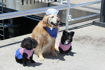 Image from a previous Pet Day on the Bay. Courtesy of Hornblower Cruises and Events.