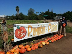 Promotional photo of Farm West Pumpkin Patch open throughout the month of October.