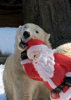 Promotional photo of a polar bear at the zoo during the holidays. Courtesy of the San Diego Zoo