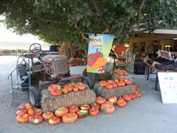 Promotional photo of The Farm Stand Fall Harvest Festival on October 26 & 27 from 10:00 am – 5:00 pm. Courtesy photo of Farm Stand West.