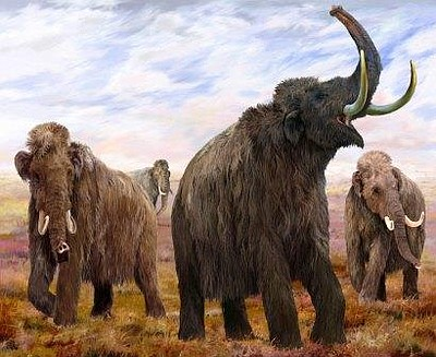 "Promotional graphic for the ""Mammoths and Mastodons: Titans of the Ice Age"" exhibition at the San Diego Natural History Museum, July 4-November 11, 2013. Courtesy of San Diego Natural History Museum"