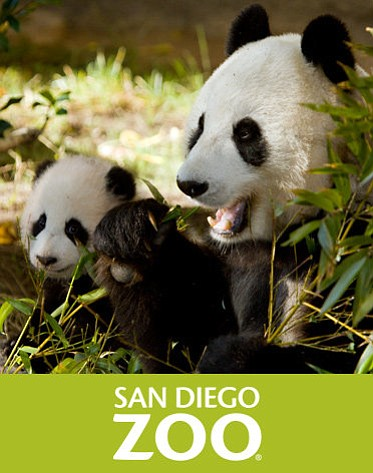 Graphic logo for the San Diego Zoo