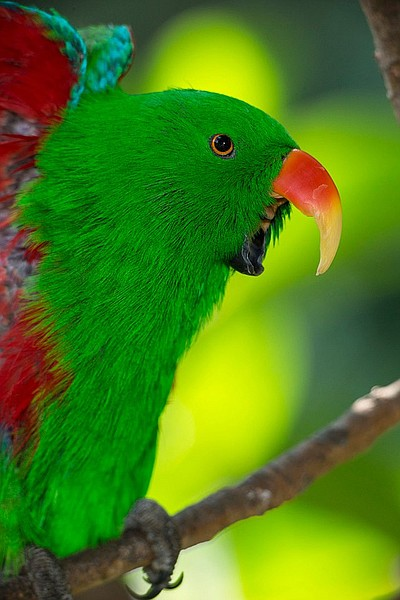 Image of a colorful bird from the San Diego Zoo.
