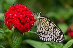 Promotional image of a butterfly at the Water Conservation Garden. Courtesy image of the Water Conservation Garden.