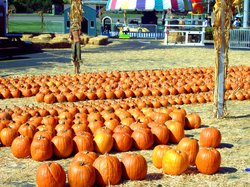 Promotional graphic for the 2014 El Cajon Pumpkin Station. Courtesy of Pumpkin Station.