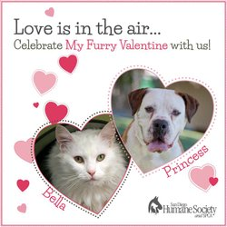 Promotional graphic for the My Furry Valentine Adoption Event on February 8, 2014 from 11 a.m. to 3 p.m. Courtesy of the San Diego Humane Society and SPCA